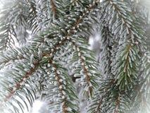 Ветви ели в заморозке Стоковые Фото
