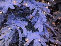 Ветви ели снега Стоковые Изображения