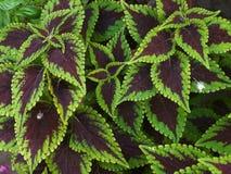 Ветви заводов с красивыми зелеными листьями Стоковые Фотографии RF