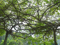 Ветви затеняя небо Стоковая Фотография