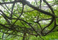 Ветви затеняя небо Стоковое Фото