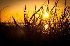 Ветви захода солнца Стоковые Изображения