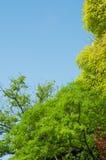 Ветви зеленых деревьев и голубого неба Стоковые Фото