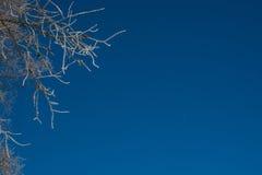 Ветви зимы деревьев в изморози вспыхивают в солнце на фоне голубого неба Стоковое Изображение