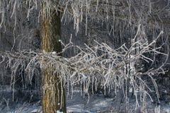 Ветви зимы деревьев в изморози вспыхивают в солнце Стоковые Фотографии RF