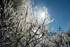 Ветви зимы деревьев в изморози вспыхивают в солнце Стоковое Фото