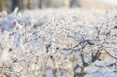 Ветви зимы Стоковая Фотография RF
