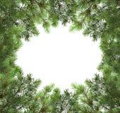 Ветви изолированной рождественской елки голубая тень орнамента иллюстрации цветка рождества Patte Стоковые Изображения RF