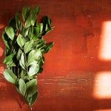 Ветви листьев залива лавра на красном цвете Стоковое Изображение RF