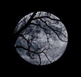 Ветви и голубая луна Стоковые Изображения