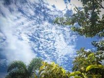 Ветви и лист Стоковые Фото