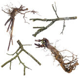 Ветви и корни установленные на Halloween Стоковое Изображение RF