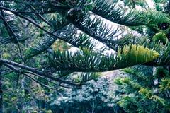 Ветви и лес дерева на холодный день стоковая фотография rf