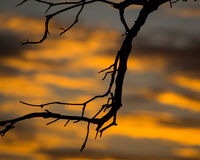 Ветви и оранжевые облака Стоковая Фотография