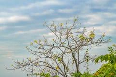 Ветви и птицы дерева Стоковое фото RF