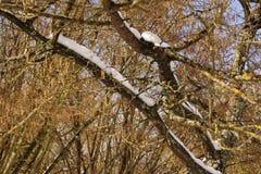 Ветви и снег - вид спереди - Франция Стоковое Изображение