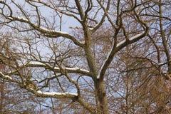 Ветви и снег - Франция Стоковые Изображения RF