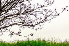 Ветви и трава Стоковые Изображения