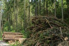 Ветви и roundwood - лесохозяйство стоковые фото