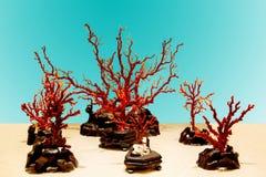 Ветви коралла Стоковые Изображения