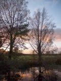 Ветви красивой осени чуть-чуть отсутствие солнца s реки сельской местности листьев Стоковые Фотографии RF