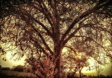 Ветви красивые дерева с лучами солнца вечера поливая на их стоковые изображения