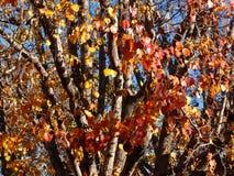 Ветви красного цвета в v Стоковое Изображение RF