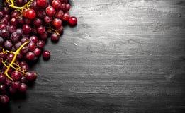 Ветви красных виноградин Стоковые Фото