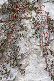 2 ветви красных ягод Стоковая Фотография RF