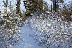 Ветви куста покрытые снегом Стоковые Изображения RF