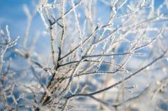 Ветви кустов предусматриванных с заморозком на солнечном утре зимы стоковые изображения rf