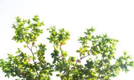 Ветви к небу Стоковое Изображение RF