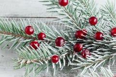 Ветви клюквы и рождественской елки Стоковое Изображение RF