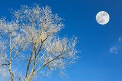 ветви лунатируют верхушка Стоковые Изображения RF