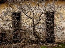ветви мертвые стоковые изображения rf