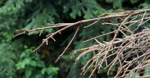 ветви мертвые стоковое фото