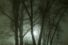 Ветви мрака дерева в тумане Стоковое Изображение RF