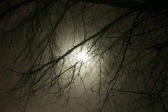 Ветви мрака дерева в тумане Стоковые Фотографии RF