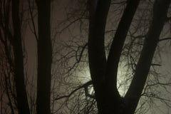 Ветви мрака дерева в тумане Стоковые Изображения