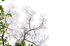 Ветви на белой предпосылке стоковые изображения
