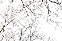 Ветви на белой предпосылке стоковое фото rf