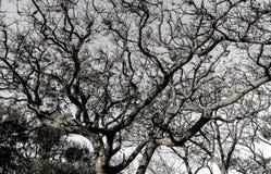 Ветви на зиме Стоковая Фотография