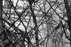 Ветви на предпосылке стоковое изображение