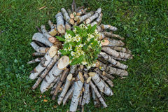 Ветви на pille с цветками Стоковые Изображения RF