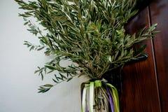 Ветви оливкового дерева на здании Стоковые Изображения RF