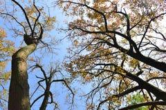 Ветви осени деревьев против неба Стоковые Фото