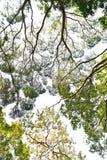 Ветви осени деревьев против неба Стоковое Фото