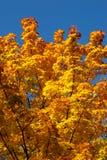 Ветви осени против неба Стоковые Изображения RF