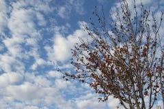 Ветви осени с голубым небом и облаками Стоковые Изображения RF