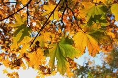 ветви осени Стоковое Фото